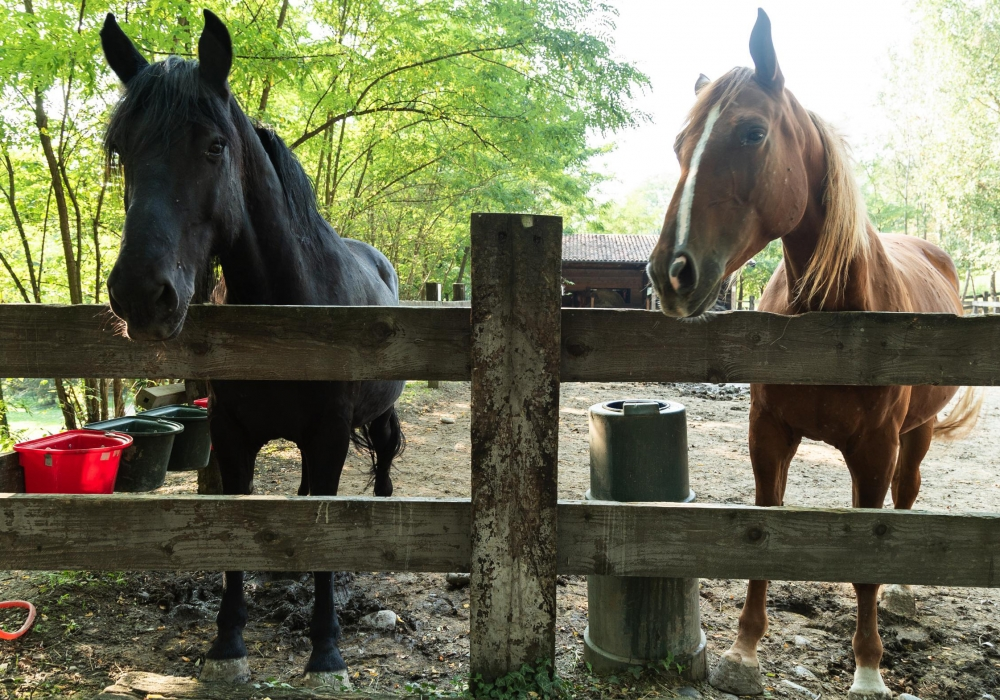 header-cavalli